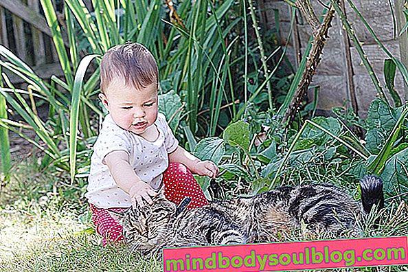 Wie man die Immunität des Babys stärkt