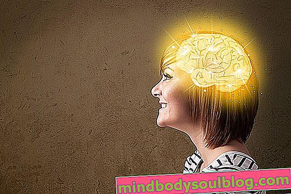 ما هو العضو الدماغي المستخدم؟
