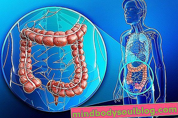 Lavage intestinal: comment procéder, avantages et risques possibles