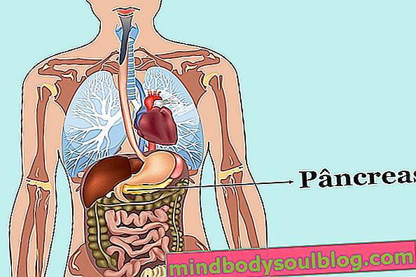 تعرف على وظائف البنكرياس والأمراض المرتبطة به