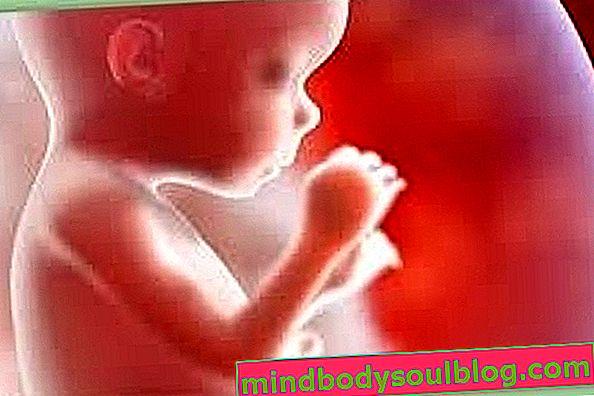 Perkembangan bayi - kehamilan 18 minggu