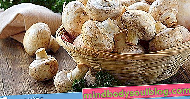 Rodzaje grzybów i 9 głównych korzyści zdrowotnych