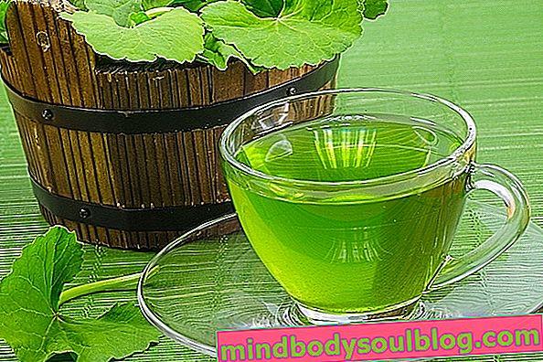 8 Gesundheitliche Vorteile von Centella asiatica