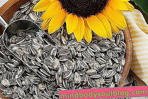À quoi servent les graines de tournesol et comment les utiliser