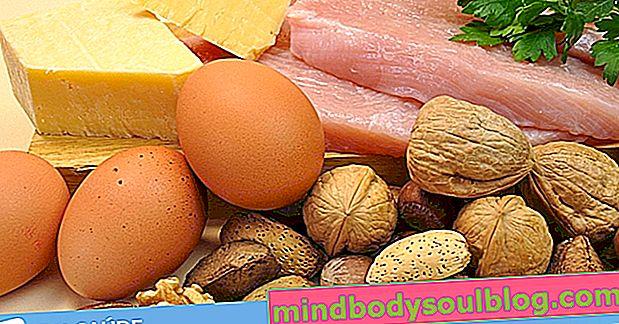מזון עיקרי בחלבונים