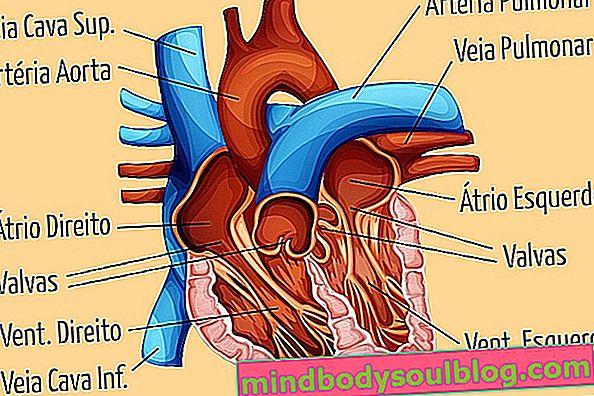 Herz-Kreislauf-System: Anatomie, Physiologie und Krankheiten