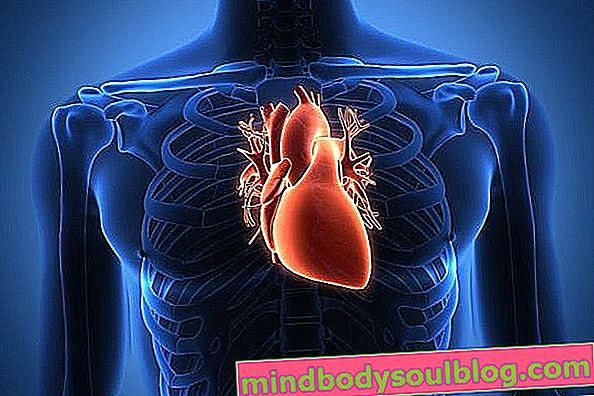 שריר הלב: מה זה, תסמינים עיקריים וטיפול