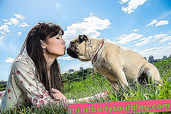 6 מחלות הניתנות להעברה על ידי כלבים