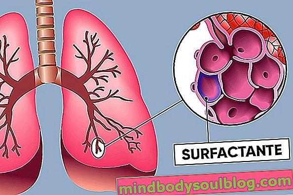 מהו חומר פעילי שטח ריאתי ואיך זה עובד