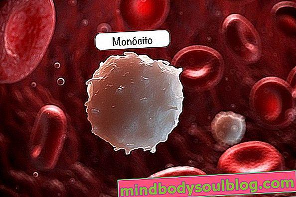 Monocytes: ce qu'ils sont et valeurs de référence