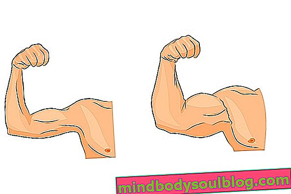 Apa itu Hypertrophy Otot, bagaimana ia berlaku dan bagaimana melakukan latihan