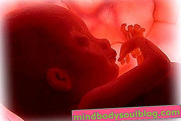 התפתחות התינוק - הריון של 28 שבועות
