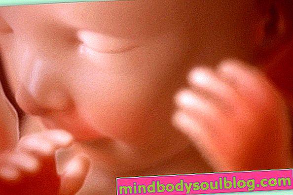 Développement du bébé - 22 semaines de gestation