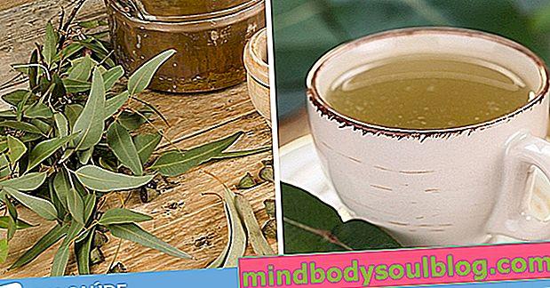 ما هو شاي الأوكالبتوس وكيف يتم تحضيره