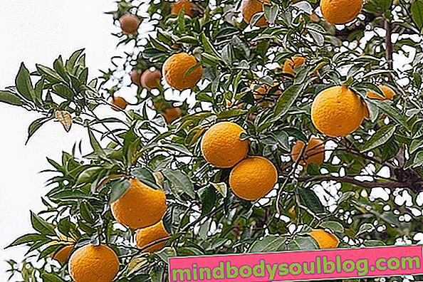 À quoi sert l'orange amère