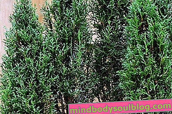 Was ist Cypress und wofür ist es?