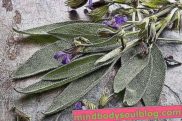 Thé de Salvia: à quoi ça sert et comment le boire