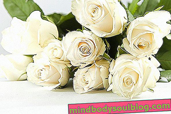 Propriétés médicinales de la rose blanche