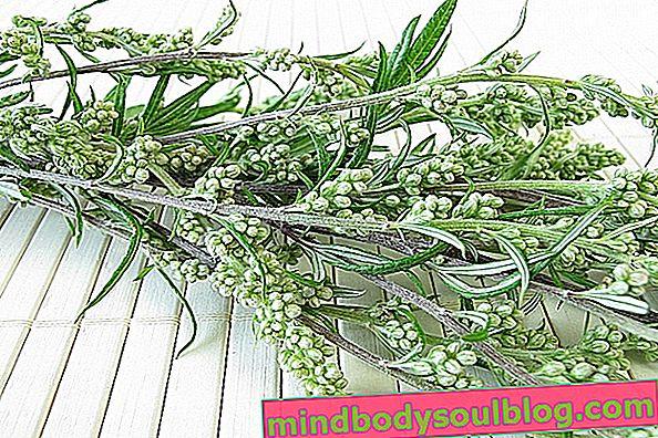 À quoi sert Artemisia et comment préparer le thé