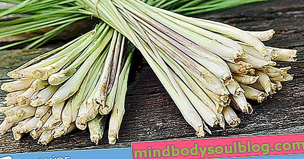 Capim santo (לימון דשא): למה הוא מיועד וכיצד להשתמש בו