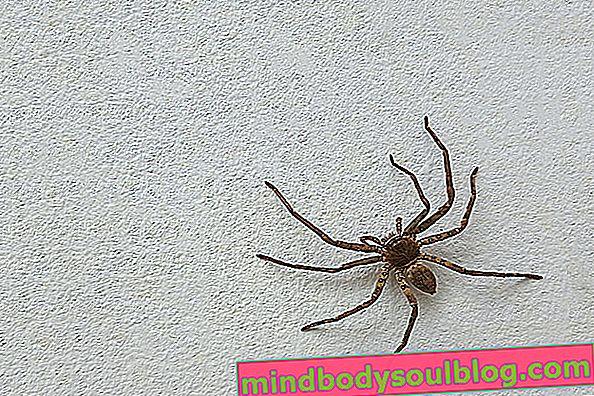 Основни симптоми на ухапване от паяк и какво да правя