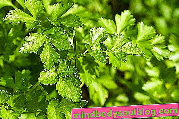 3 meilleurs thés au persil pour les infections des voies urinaires