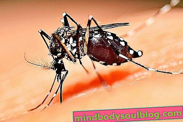 Symptômes causés par le virus Zika