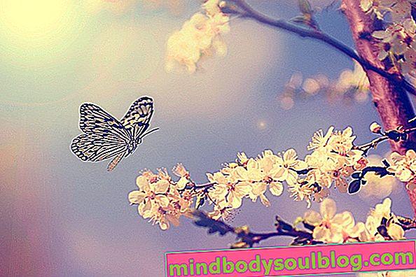Peur des papillons: symptômes, causes et traitement